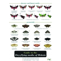 Day-flying Moths, a laminated fold-out chart - Richard Lewington