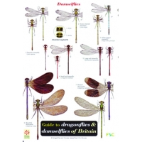 Dragonflies & Damselflies of Britain, a laminated fold-out chart