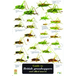 British Grasshoppers & Allied Insects, a laminated fold-out chart