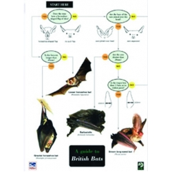 Guide to British Bats, a laminated fold-out chart