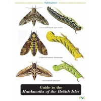 Hawkmoths of the British Isles, a laminated fold-out chart