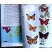 ACP. Butterflies - used copy