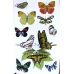 ACP. Butterflies - used copy