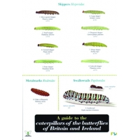Caterpillars of Butterflies of Britain & Ireland, a laminated fold-out chart
