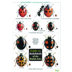 Guide to Ladybirds of the British Isles, a laminated fold-out chart