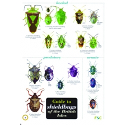 Shieldbugs of the British Isles, a laminated fold-out chart