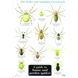House and Garden Spiders, a laminated fold-out chart