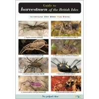 Harvestmen of the British Isles, a laminated fold-out chart