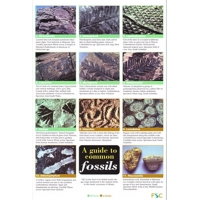 Common Fossils, a 12 page laminated fold-out chart.