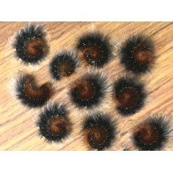 Garden Tiger caja Woolly Bears. 10 Larvae