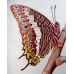 Two-tailed Pasha Charaxes jasius 5 larvae SPECIAL PRICE!
