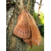 Chinese Oak Silkmoth A pernyi 3 cocoons
