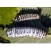Cherry Moth promethea 5 cocoons for breeding