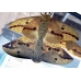 Imperial Silkmoth Eacles imperialis pini  pupae  SPECIAL PRICE for TEN PUPAE!