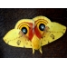 Bullseye Moth Automeris io eggs SPECIAL PRICES!