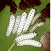 Cherry Moth promethea 15 eggs